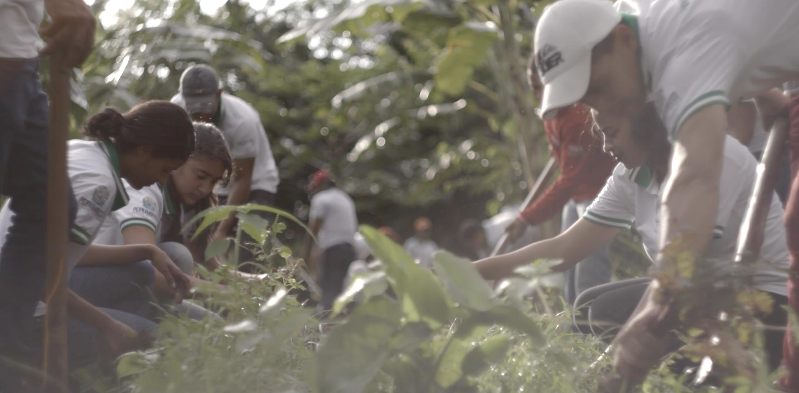 Na imagem, alunos da escola SERTA trabalham juntos em uma plantação